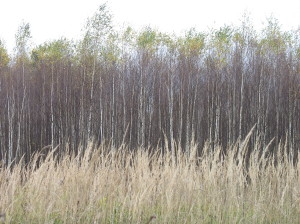 Поля заросли сорным лесом